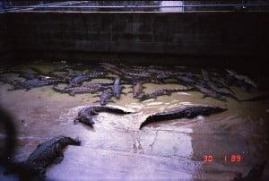 Darwin 1989