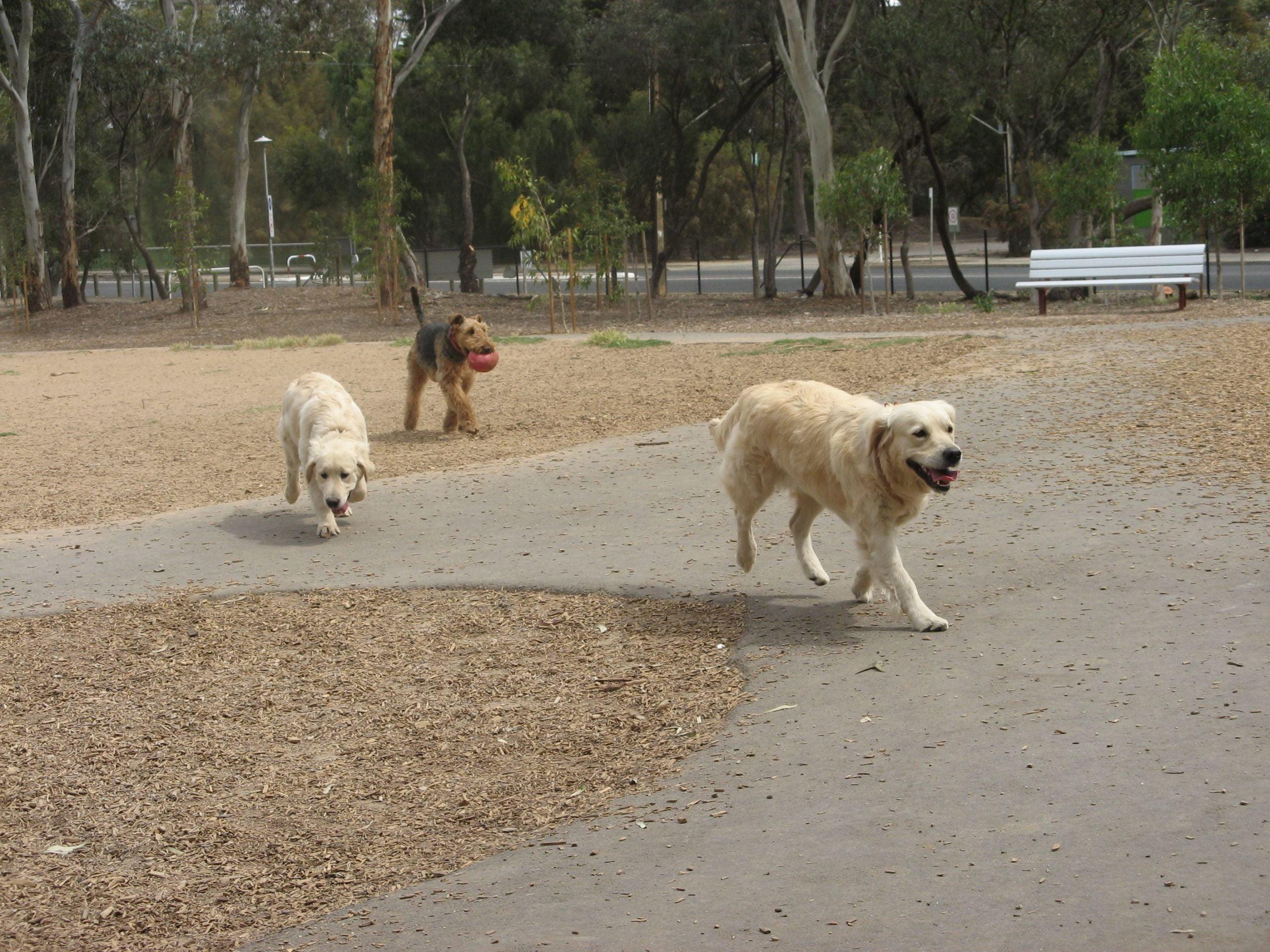 Hostworks Dog Day