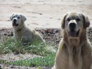 Dune Dogs (Home Slider)