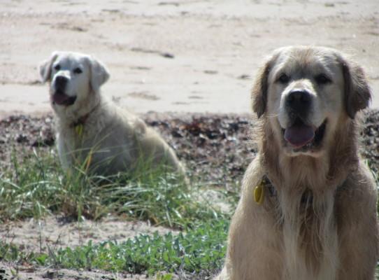 Dune Dogs