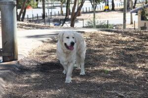 Jake (Dogs)