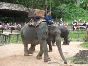 Elephants in Thailand (Holidays)